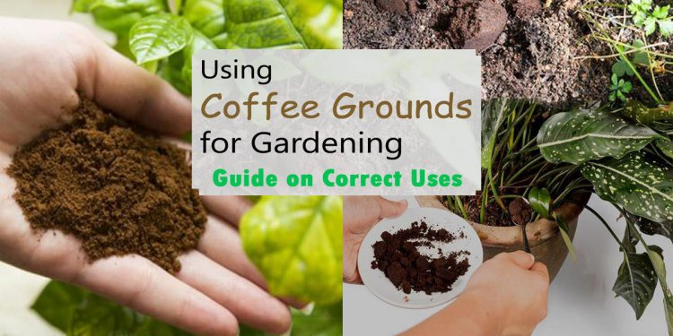 Using Coffee Grounds for